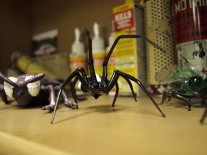 Photo of a glass spider and various historical pest control items on a shelf at the Central Exterminating Company's main office.