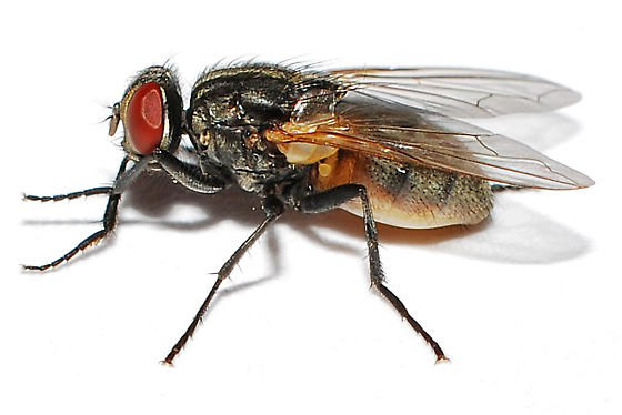 Image Result For Exterminating Ants